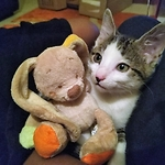 Help Baby Cat Zeus with his Go Fund Me Recovery Page - It needs Promoting and Exposure