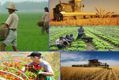I will make you UK Agriculture,  Forestry, Landscaping, Veterinary Services etc contact list