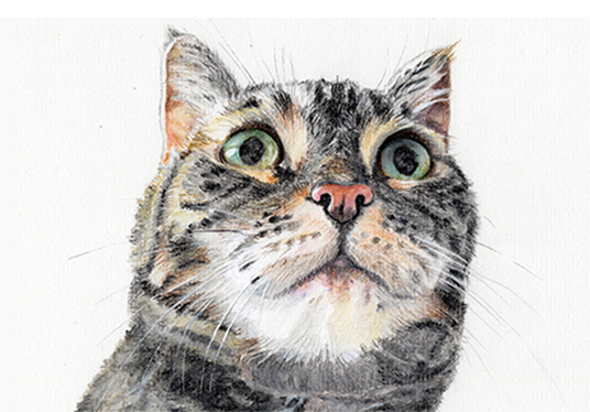 I will draw any pet or animal portrait in a realistic manner