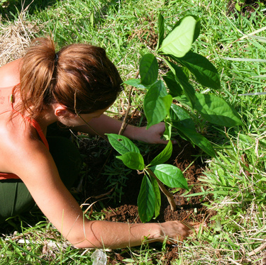 plant a tree in a natural rain forest Costa Rica
