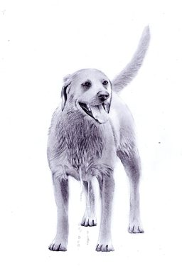 draw your pets