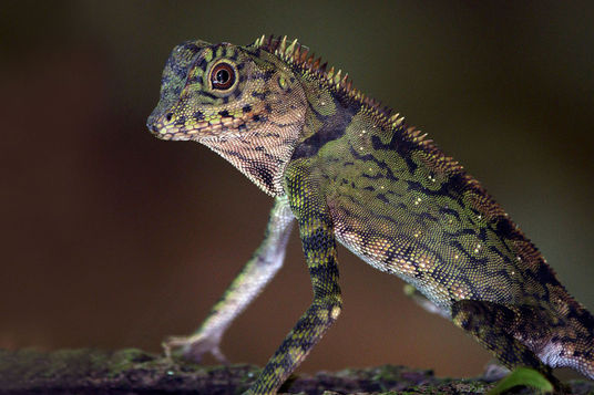I will Provide an Animal Caresheet For Exotic Pets