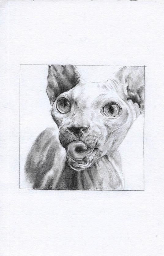 I will create an A5 photorealistic piece of artwork of any portrait from pencil