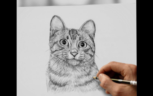 I will Draw Portrait Of Your Pet