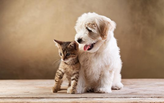 I will do guest post on PET related blogs