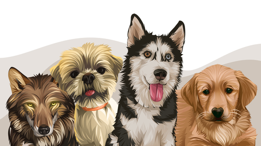 I will make an animal cartoon vector from your pet