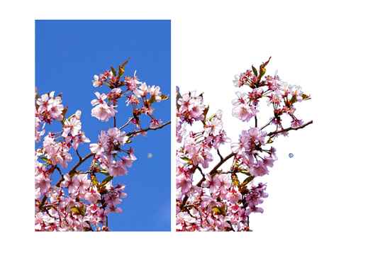 I will Do Photo Background Removal For 5 images