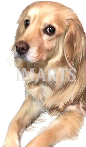 I will turn your pet portrait into digital painting or hand drawn
