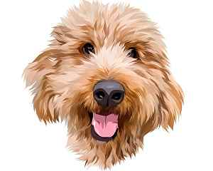 I will Turn your pet's photo into a cartoon portrait in 24 hours