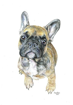I will do a realistic portrait of your pet