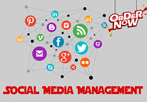 I will provide you all social media management
