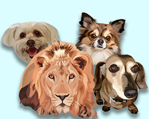 I will draw your pet or any animal into cool vector cartoon