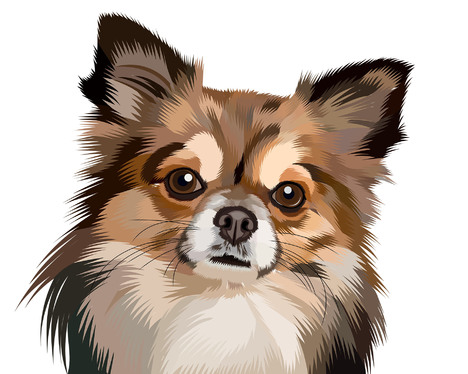draw your pet or any animal into cool vector cartoon