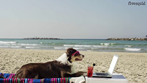 I will make this funny Dog commercial video