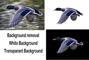 I will remove background of your 5 images