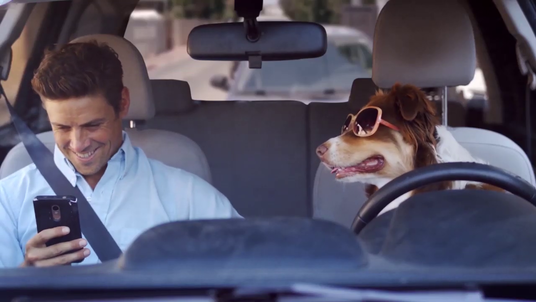 make funny dog driving advertising video