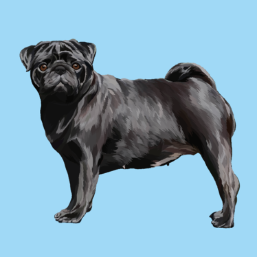 create realistic vector portrait of your cat, dog, or any pets