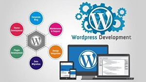 I will do WordPress optimisation and Development