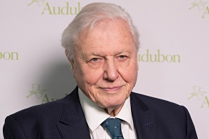 I will record the best David Attenborough impression (up to 150 words)