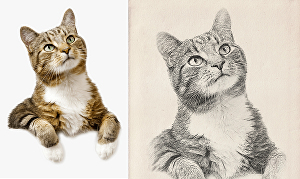 I will turn your beloved pet photograph into a beautiful pencil drawn sketch style digital photog