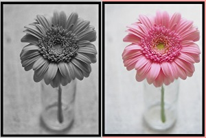 I will colorize 50 black and white photos