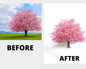I will  do 10 photos Background removal